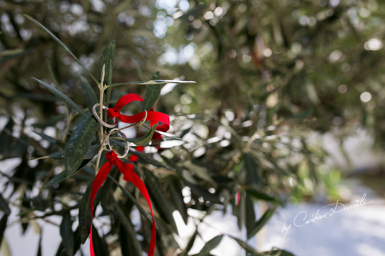 Wedding of Costas & Maria - Nicosia, Agios Dometios 01