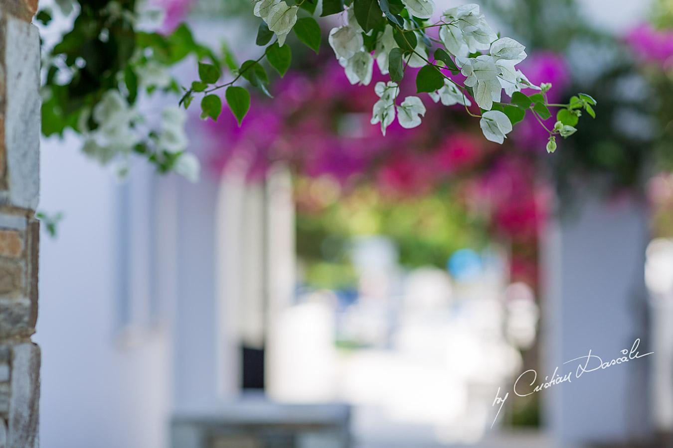 Wedding Photography at Aliathon Beach Holiday - 19