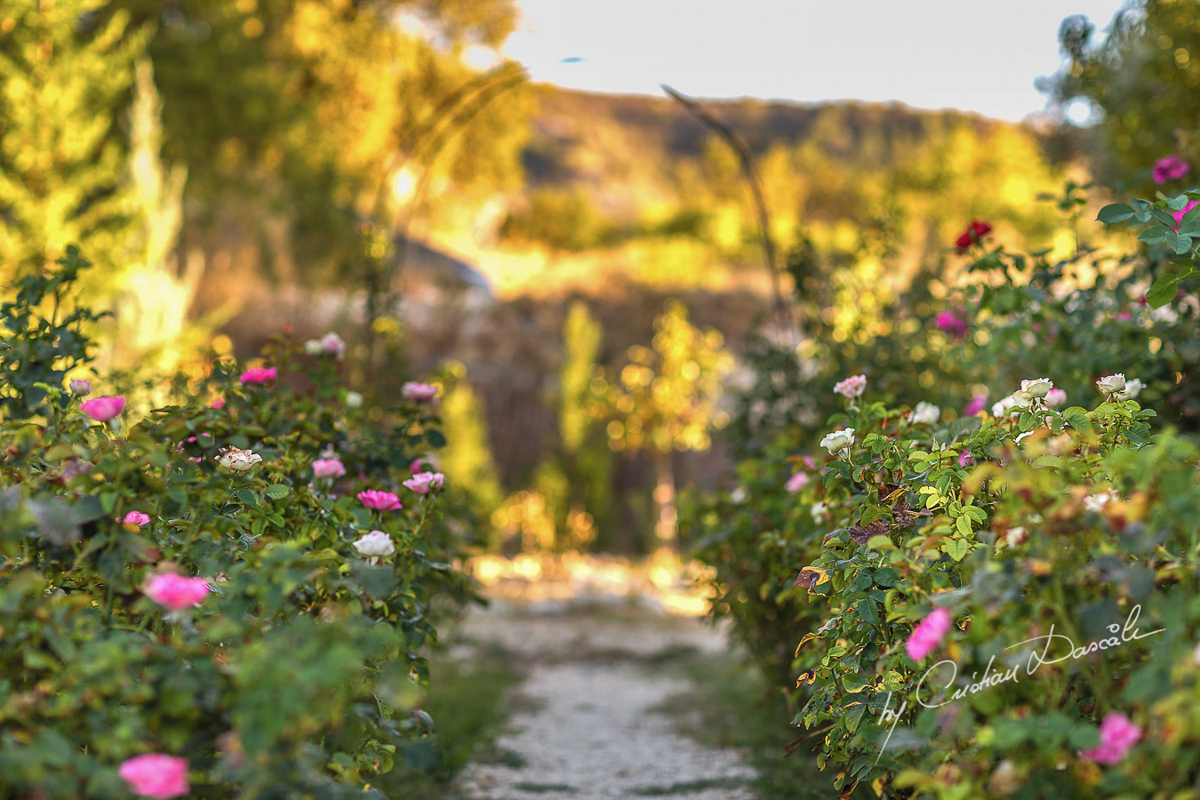 The Roses Alley captured at Villa in Trimiklini.