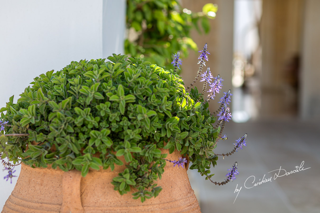 Green details at the beautiful Anassa Hotel photographed by Cyprus Photographer Cristian Dascalu.